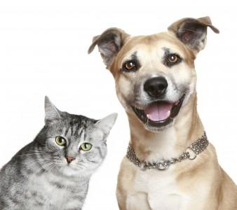 Câncer em Cães e Gatos: Tipos – Causas – Sintomas – Diagnóstico – Tratamento e Cura